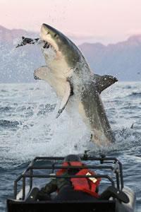 shark-divin-trips