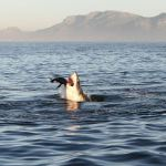 False Bay Shark Diving