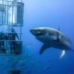 False Bay AM Shark Diving Trip