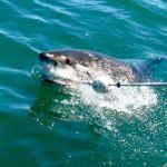 Shark Diving Trips in False Bay