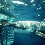 Shark Diving Trips Mossel Bay