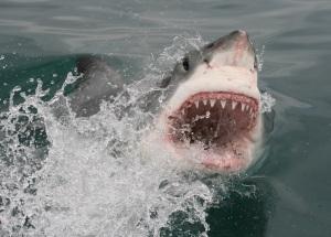 Mossel Bay Shark Diving Trips