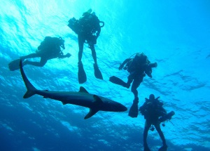 False Bay Scuba Diving Trip