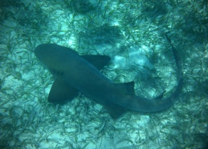 False Bay Snorkeling