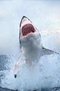 shark-diving-trips