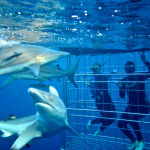 False Bay scuba diving