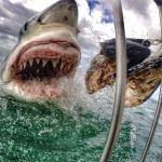 Shark Diving trip to Mossel Bay