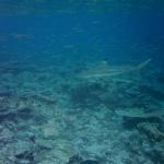 False Bay Blue Water