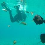 Scuba Diving in False Bay