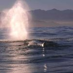 Hermanus Whale Route Tour