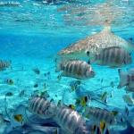False Bay Mako Sharks