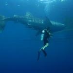 False Bay Diving Trip