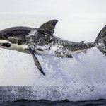 False Bay Shark Diving Special