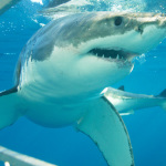 Shark Diving in Mossel Bay