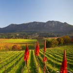 Constantia Wine Farms Tour