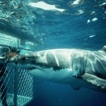 Shark Diving Trips Mossel Bay