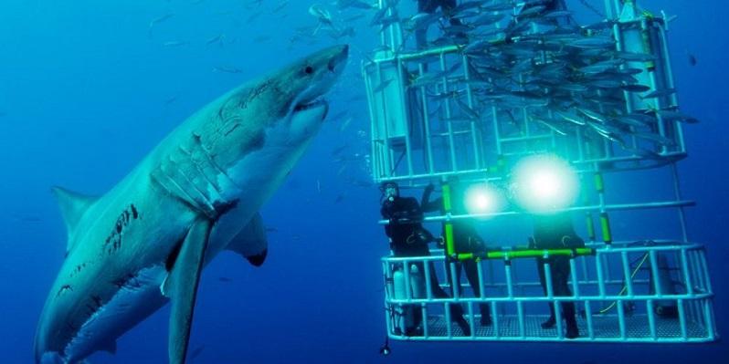 Shark Cage Diving in Gansbaai History | Shark Zone Blog