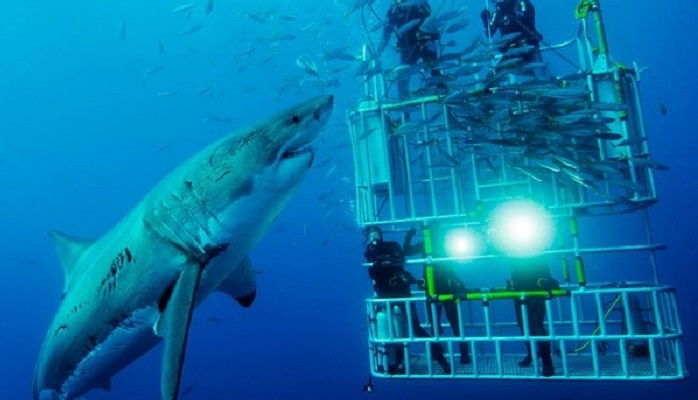 Image Credit- sharkzone.co.za