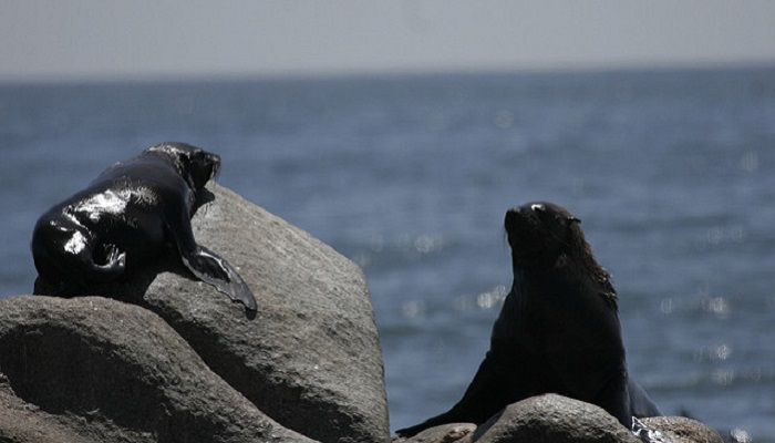 Cape Town marine life