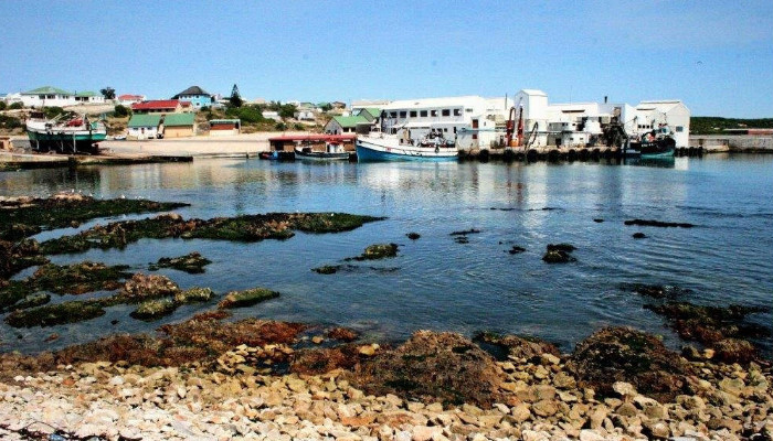 Great white sharks in Gansbaai